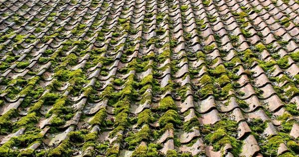moss/algae growth on tile roof